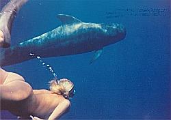 Begegnung mit Pilotwalen im Rahmen meiner musikalisch-akustischen KommunikationsForschung mit Walen & Delphinen
